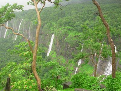 Bhimashankar Forest