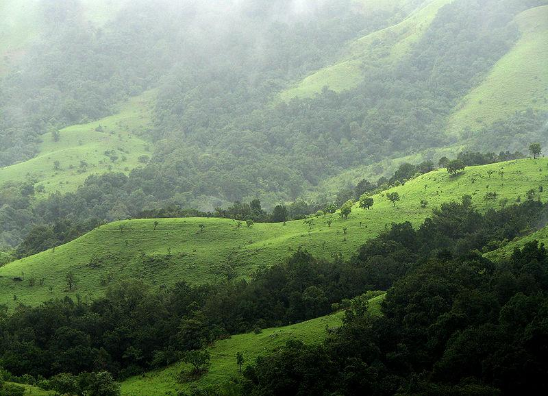 Shola Grasslands and forests in the Kudremukh National Park