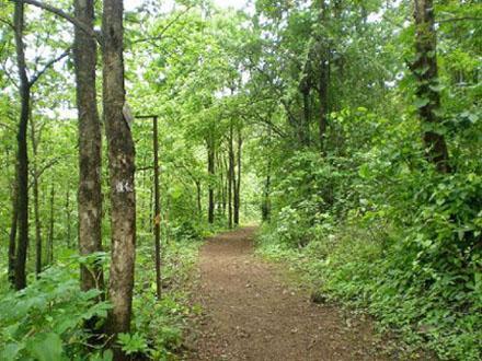 Durshet forest