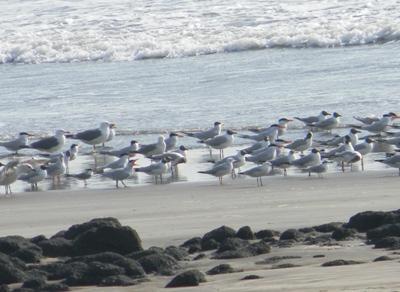 Harnai Beach