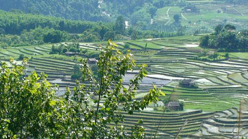 Terrace cultivation yingkiong