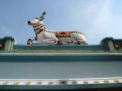 cow image bheemeshwari temple