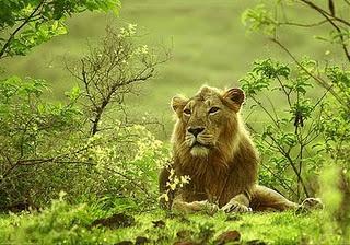 Sakkarbaug Zoo Wildlife