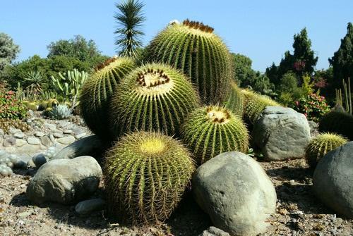 Cactus Garden Panchkula