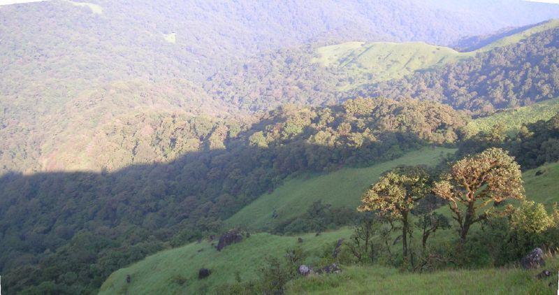 Shola habitats