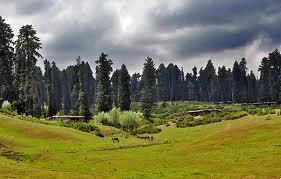 Yusmarg-Kashmir