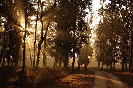 Morning in kanha park