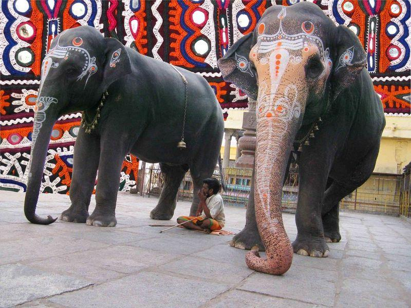 Kanchipuram Temple Elephants