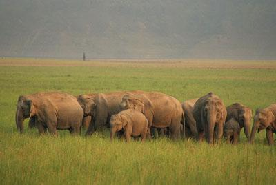 Elephant herd at Jim Corbett National Park