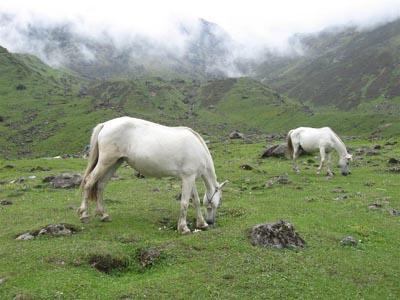 Kedarnath Horse