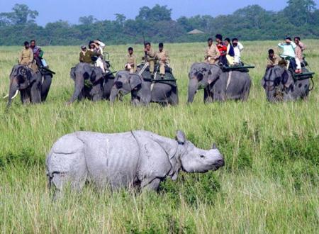 National Park Assam