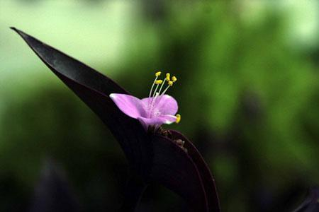 Orchid Assam India orchid