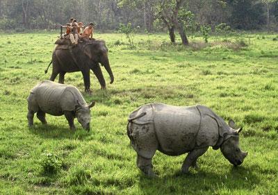 Rhinos at Baghmara