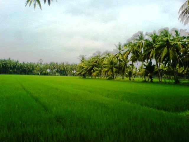 Farming in and around Kakinada
