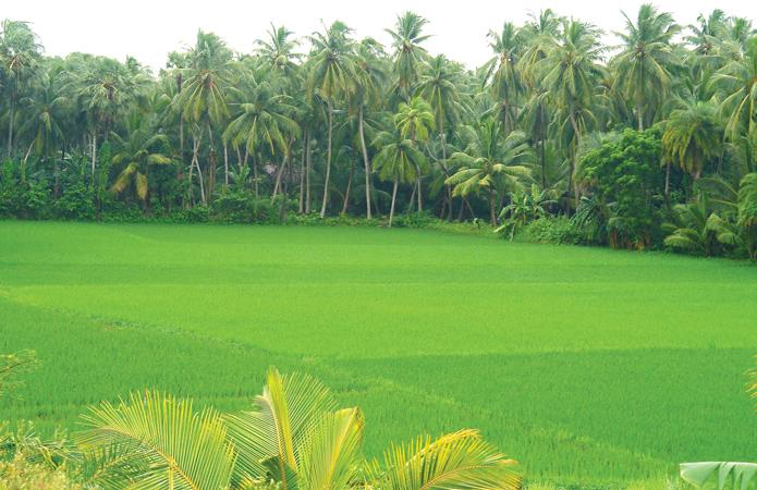 Konaseema is known for its green Coconut orchards