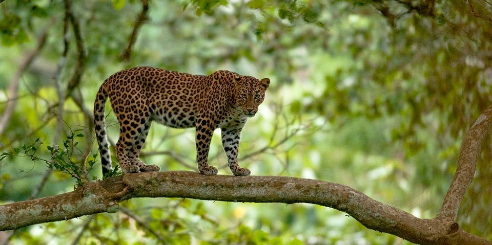 Kabini India  City new picture : Kabini Travel Guide, Tourist places,Kabini Photos, Kabini Tourism