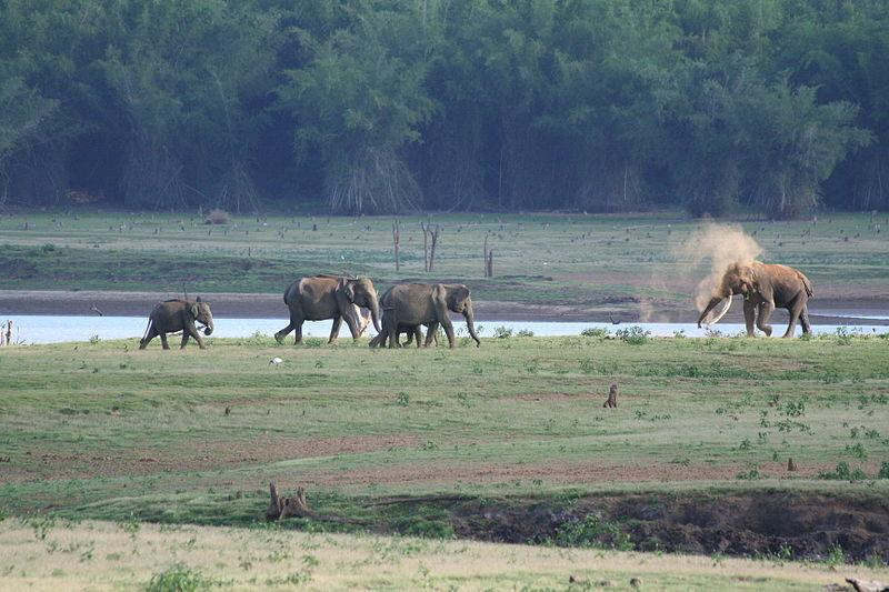 Elephant family on the Kabini River bank