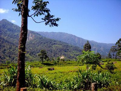 Gorubathan Tea Estate