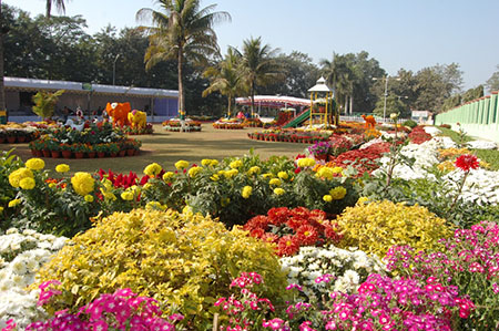 Flower show at Raigarh