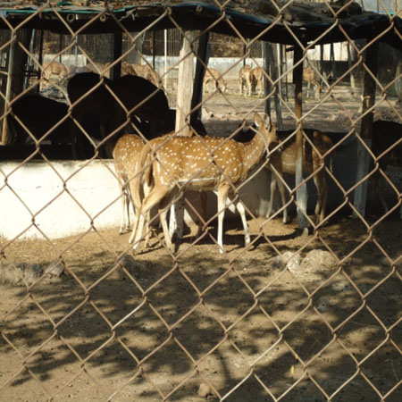 Raipur District wildlife sanctuarie