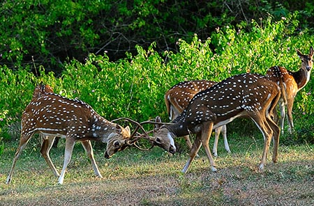 Bandipur National Park, Bandipur, Chamarajanagar district