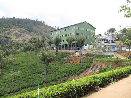 Tea factory and tea plantation